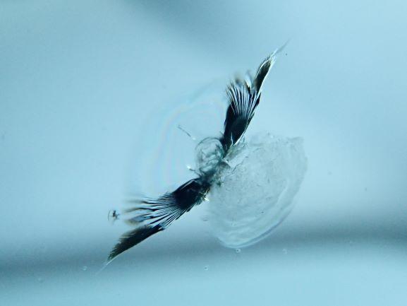 京都市中京区 ルノー メガーヌ フロントガラス ヒビをガラスリペア